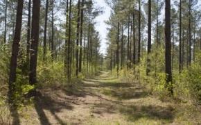 reno-sharpe-store-road-238-acres-28