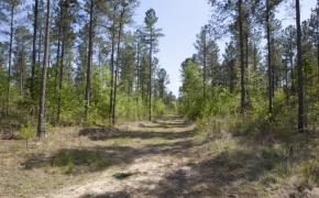 reno-sharpe-store-road-238-acres-29