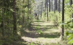 reno-sharpe-store-road-238-acres-33