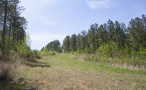 reno-sharpe-store-road-238-acres-6