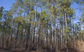 trees-13