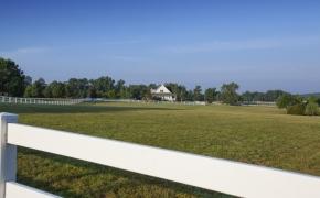 Horse field 1