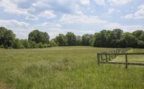 Green Pasture 1