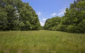 Green Pasture 2