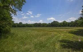 Green Pasture 3