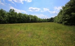 Green Pasture 4