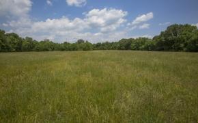 Green Pasture 5