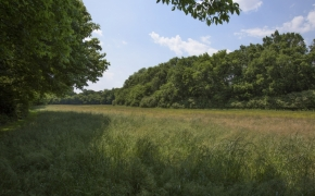 Green Pasture 6