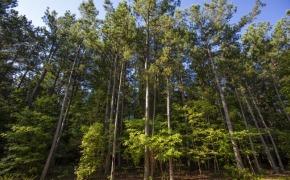 Uzzle-Road-Timber-1