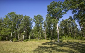 Uzzle-Road-Timber-2