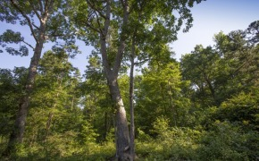 Uzzle-Road-Timber-4