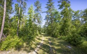Uzzle-Road-Timber-5