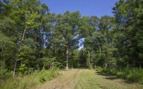 Uzzle-Road-Timber-6