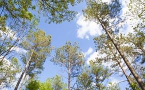 Trees 12.jpg