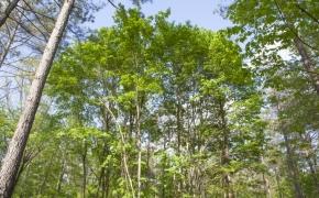 Trees 14.jpg