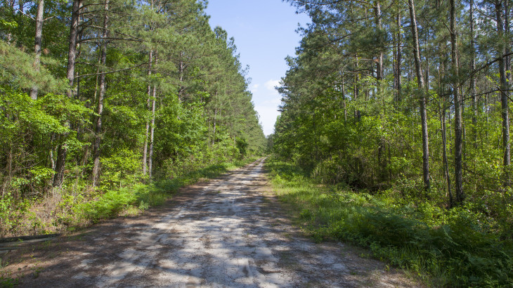 168 Acres at Grimes Road for sale