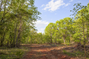 219.6 Acres on Burnside Road in Vance County NC