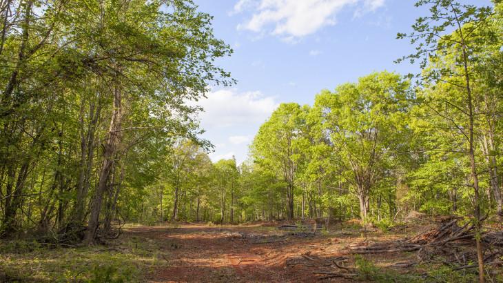 219.6 Acres on Burnside Road in Vance County NC