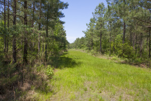 372 Acres for sale in halifax County