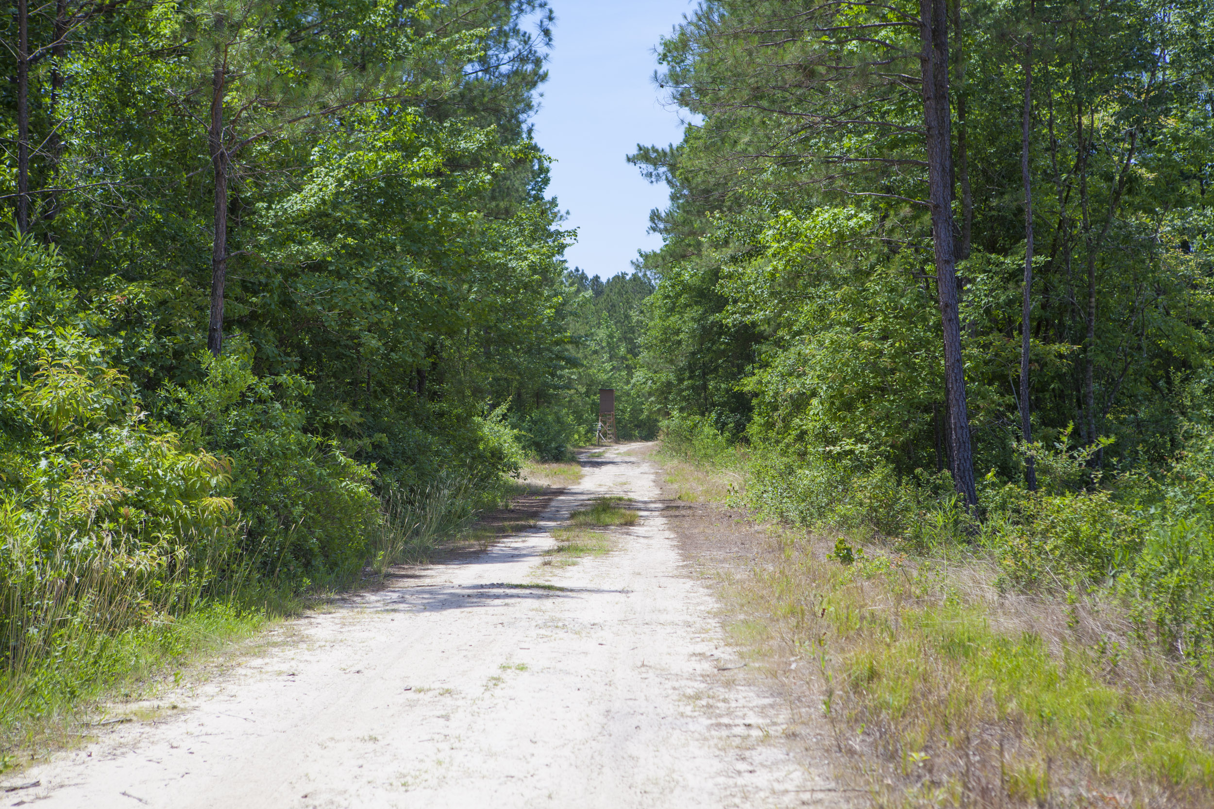 Wilson County Land for Sale near Wilson and Saratoga, NC