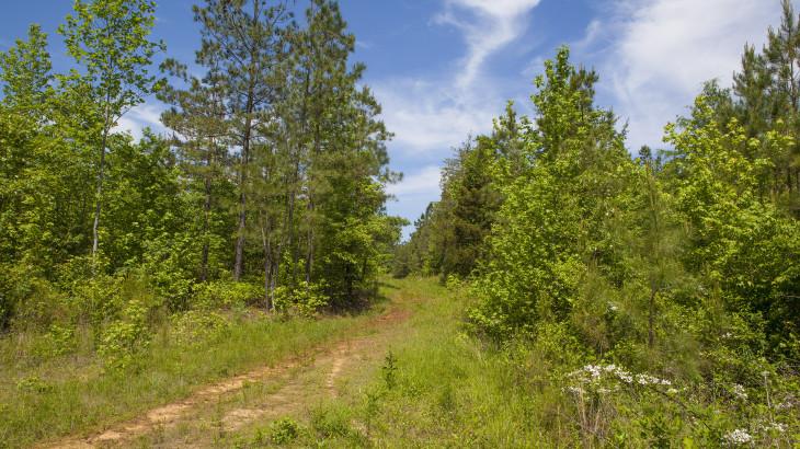 130 Acres near Littleton