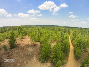 Timber farmers look for land with multiple tree ages like this Partian Road Chatham County NC land for sale.