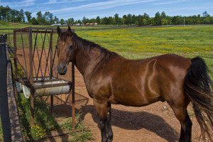 Horse Properties For Sale, Equestrian ranches for sale, Acreage For Sale in NC