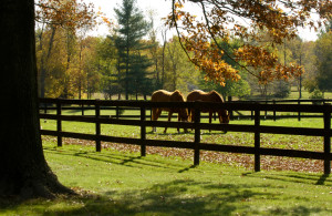 Land for Sale in Lee County NC | Horse Farm for Sale in working, move-in shape.