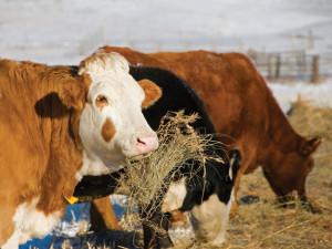 Farms for sale, North Carolina land for sale, livestock