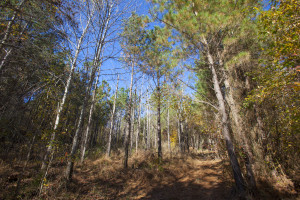 Franklin County NC offers many standing timber farms and land for sale.