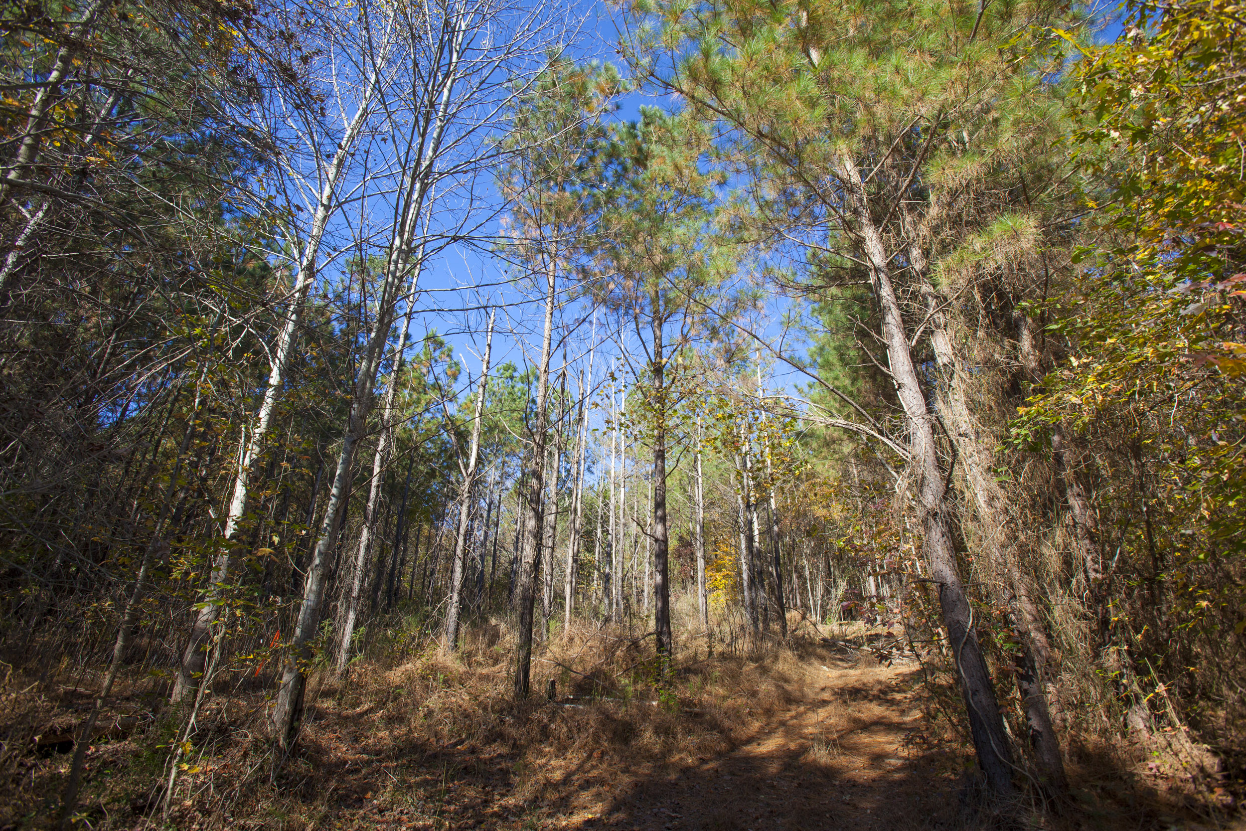 Franklin County offers many standing timber farms.