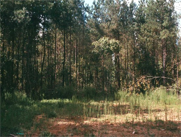 Just 10 minutes from Duke University, this land for sale in Orange County, NCis an example of the wooded areas still available for horse farms, subdivisions, or hunting and recreation.