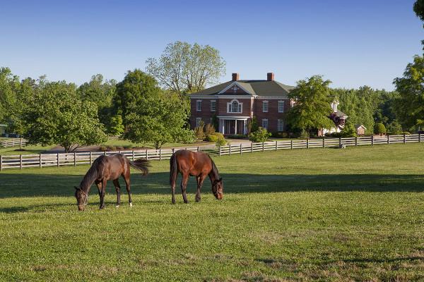Horse Farms in North Carolina