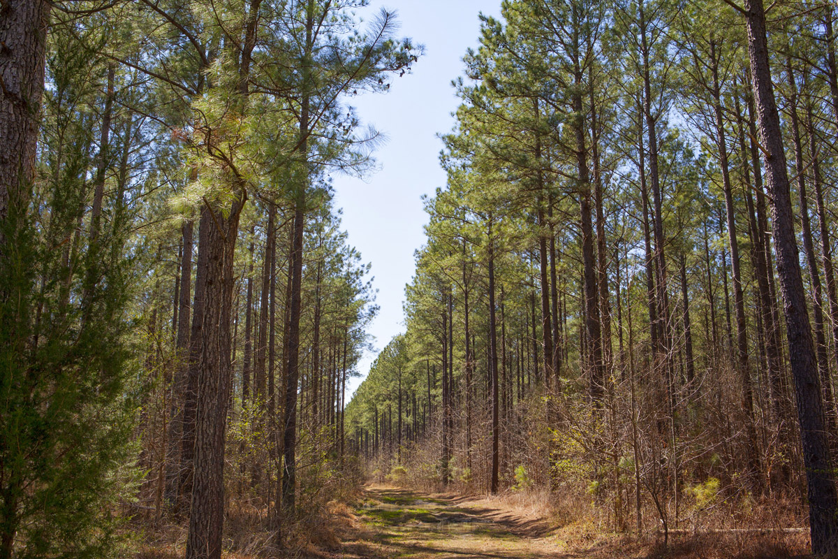 Timberland And Farmland Acquisition