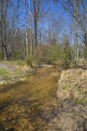 Blue line Streams in NC