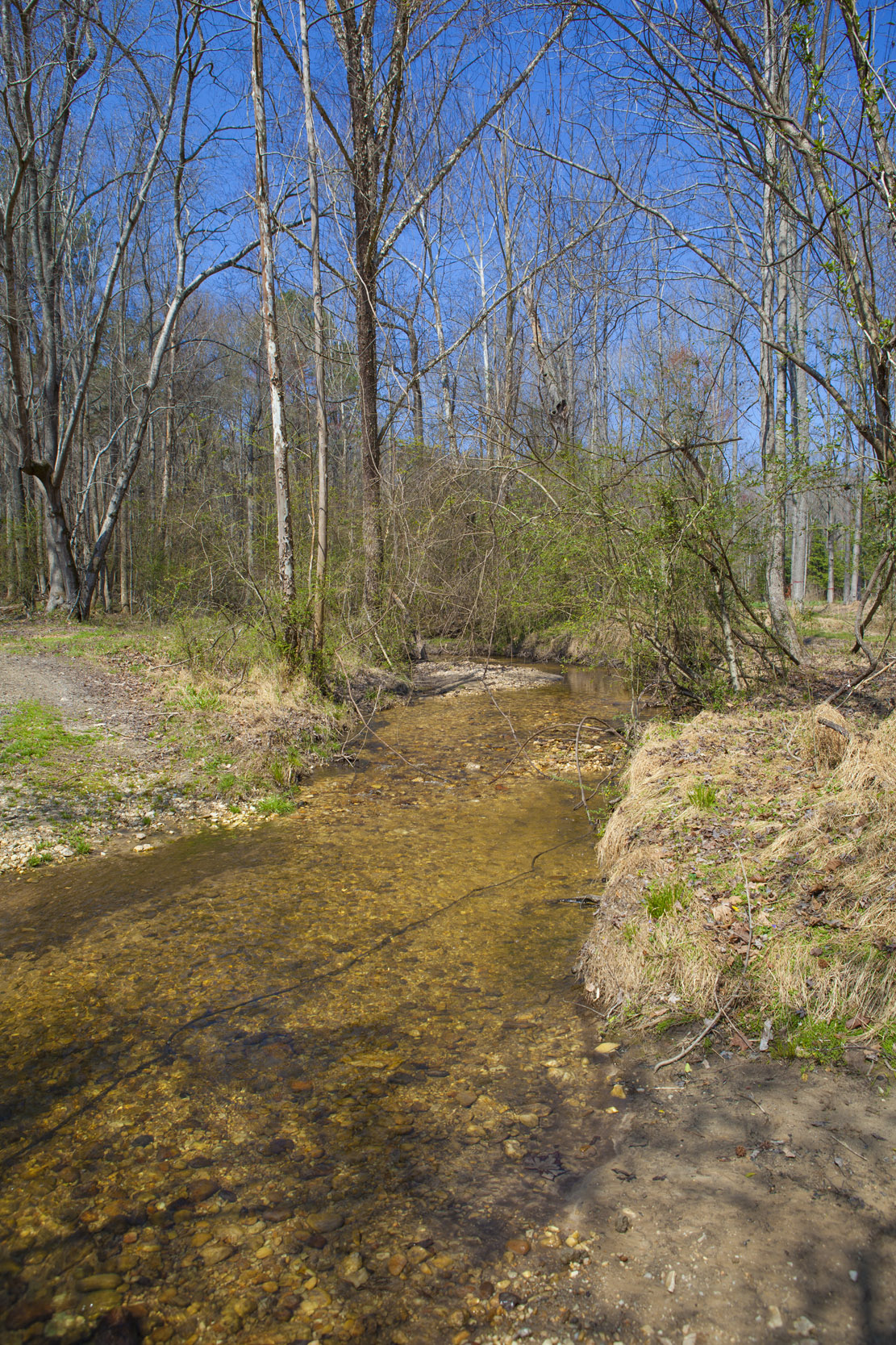 Blueline Streams in NC