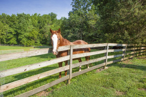 Horse Care in North Carolina