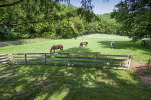 Managing Your Horse Property's Pastures