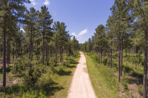 1174 Acres for Sale