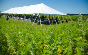 Industrial Hemp Production in NC