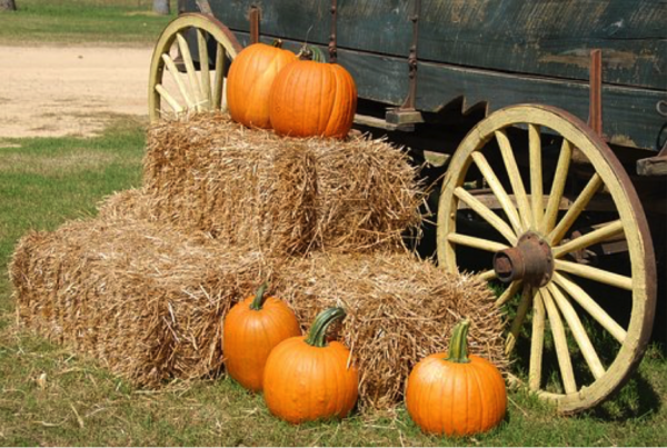 Fall Family Fun in North Carolina