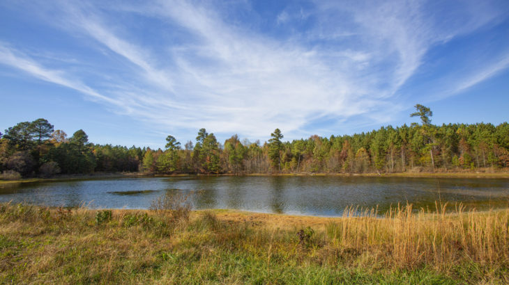 Pond and Timber Properties for Sale Henderson on 0 Epson Rocky Ford Road