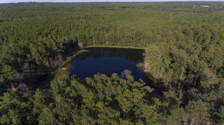 58.32 Acre Tract With Paved Road Frontage on Hillmon Grove Road