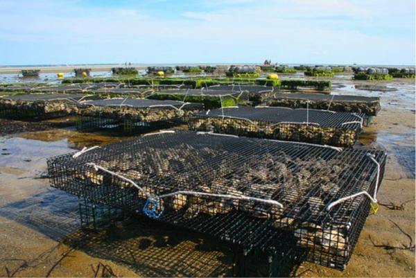 Aquaculture in NC
