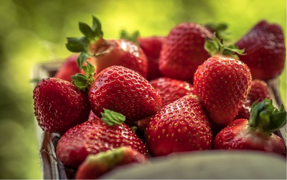 Finding Fresh Produce in NC and Supporting Local NC Farms
