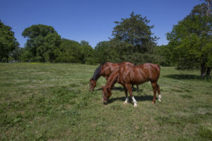 Horse Farm in Chatham County Silk Hope area