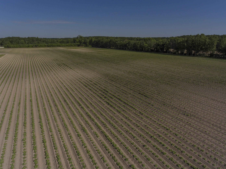Land for sale in Harnett County, North Carolina