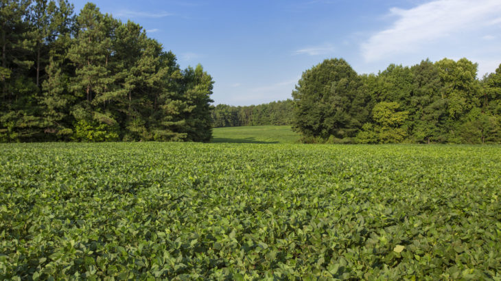 Cornwall Road Land for Sale