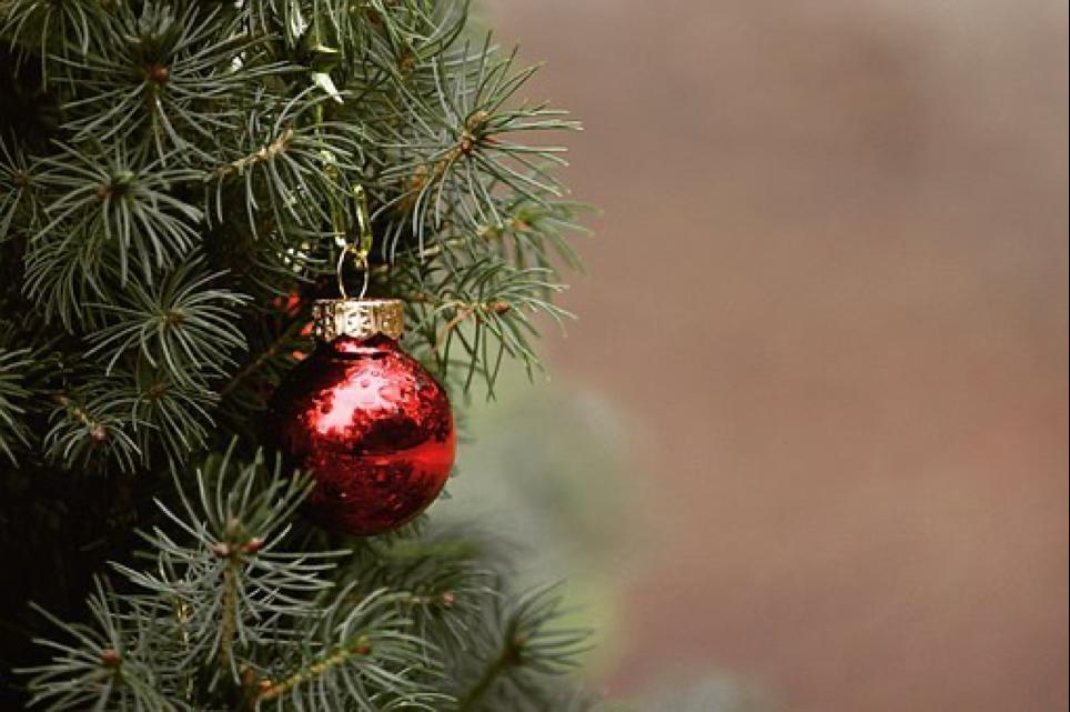 Raleigh Christmas Tree Locations, Durham, Chapel Hill NC