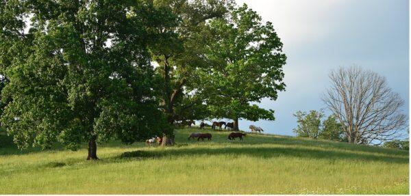 Equestrian Farm Legal Issues NC